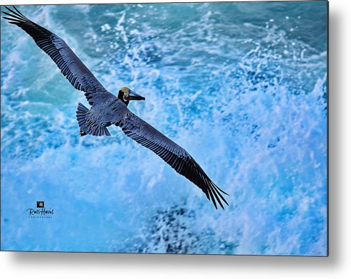 Pelican In Flight Metal Print featuring the photograph Pelican In Flight by Russ Harris