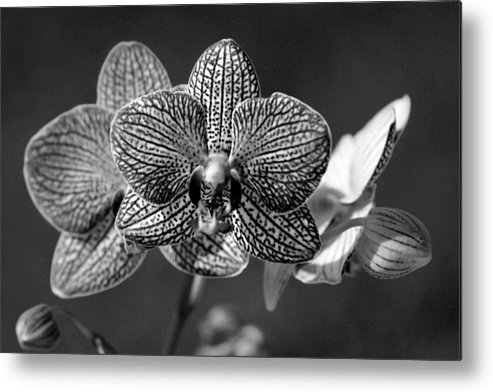 Orchids Metal Print featuring the photograph Orchids by Tony Ramos