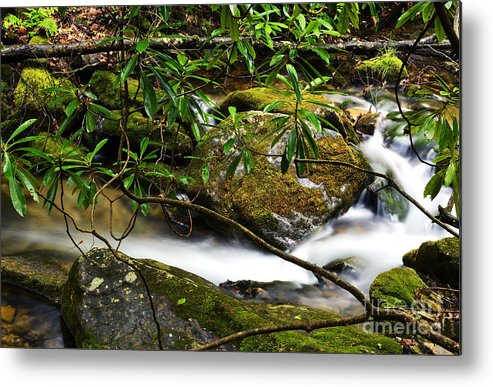Rushing Mountain Stream Metal Print featuring the photograph Rhododendron And Waterfall by Thomas R Fletcher