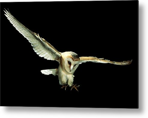 Nature Metal Print featuring the photograph Barn Owl by Andy Harmer