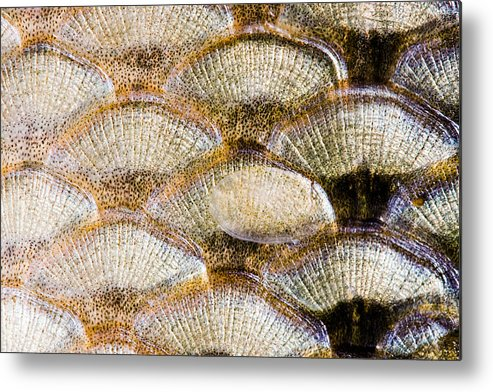 Abstract Metal Print featuring the photograph Fish Scales Background by Odon Czintos