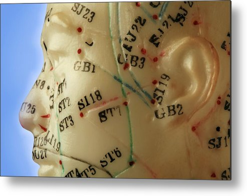 Acupuncture Metal Print featuring the photograph Chinese Acupuncture Model by Doncaster And Bassetlaw Hospitals