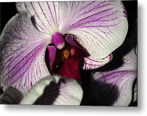 Pink Orchid Metal Print featuring the photograph A Beloved Gift by Wanda Brandon