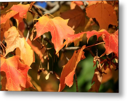 Glimpse Metal Print featuring the photograph A Glimpse Of Autumn Color by Julia Mayo