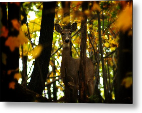 Hovind Metal Print featuring the photograph Alert Doe by Scott Hovind