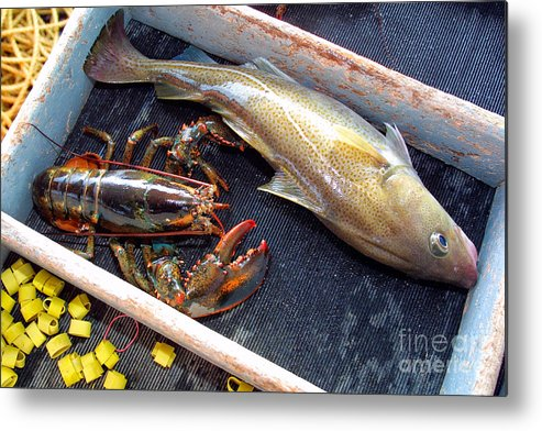 Seafood Metal Print featuring the photograph American Lobster And Cod Caught Off Chatham On Cape Cod by Matt Suess