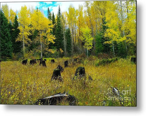 Trees Metal Print featuring the photograph An Old Clear Cut In Autumn by Jeff Swan