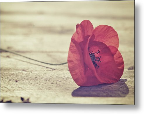 Horizontal Metal Print featuring the photograph Antique Poppy by JayneBurfordPhotography