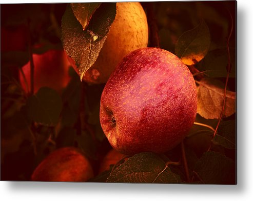 Apples Metal Print featuring the photograph Apples by Paul Roach