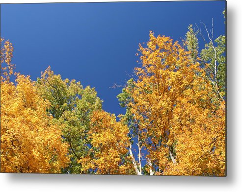 Nature Metal Print featuring the photograph Autumn Has Arrived by Leann DeBord