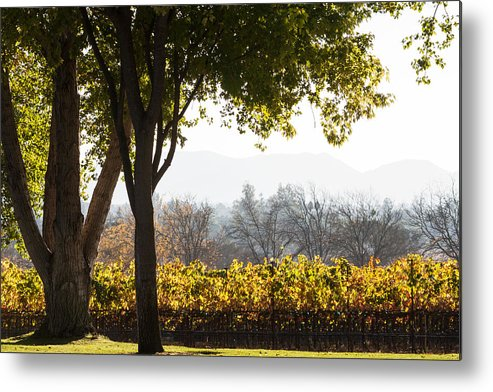 Autumn Metal Print featuring the photograph Autumn In A Vineyard by Dina Calvarese