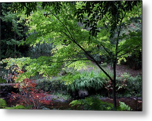 Fall Metal Print featuring the photograph Autumn Maples by Celine Pollard