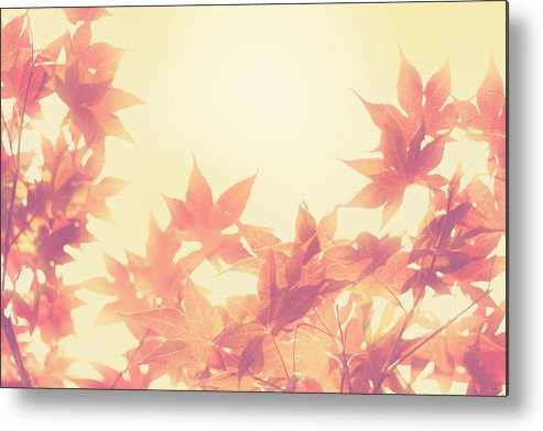 Autumn Metal Print featuring the photograph Autumn Sky by Amy Tyler