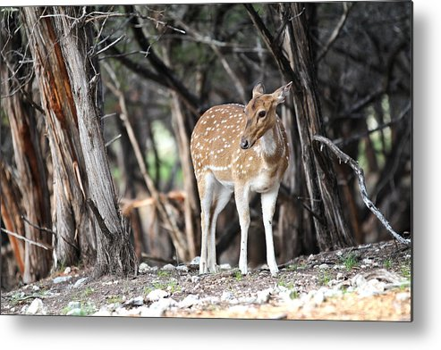 Axis Metal Print featuring the photograph Axis by Elizabeth Hart