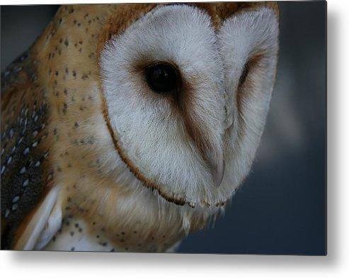 Owl Metal Print featuring the photograph Barn Owl Closeup by Isaac Green