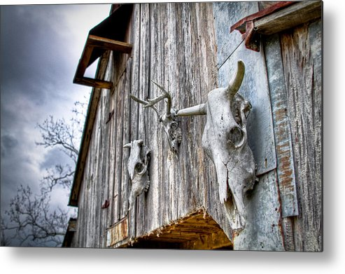 Cow Metal Print featuring the photograph Barnstorm by Pixel Perfect by Michael Moore