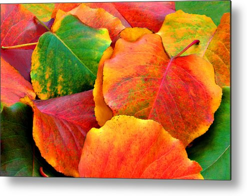 Colorful Metal Print featuring the photograph Beautiful Fall Leaves by Sheila Kay McIntyre