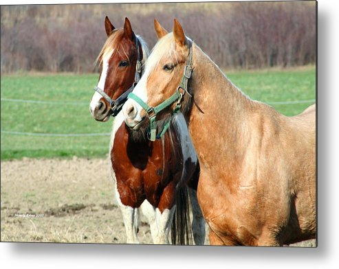 Horse Metal Print featuring the photograph Best Friends by Beverly Kobee