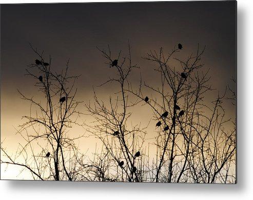 Black Birds Metal Print featuring the photograph Bird Cove by Wanda Brandon