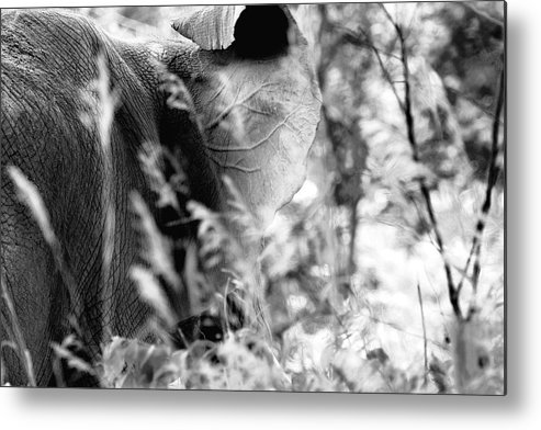 African Elephant Metal Print featuring the photograph Blending Into Camouflage by Angela Rath