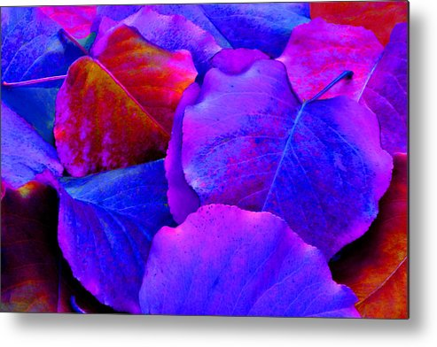 Colorful Metal Print featuring the photograph Bluish Purple And Pink Leaves by Sheila Kay McIntyre