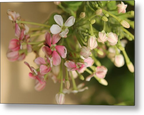 Floral Metal Print featuring the photograph Breakfast by Sladjana Lazarevic