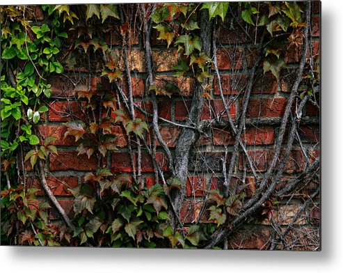Facades Metal Print featuring the photograph Brick And Ivy by Richard Gregurich