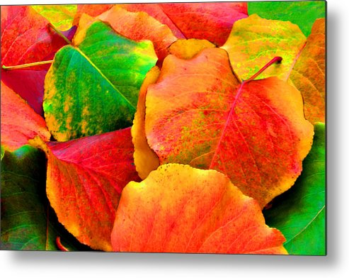 Colorful Metal Print featuring the photograph Bright Beautiful Fall Leaves by Sheila Kay McIntyre