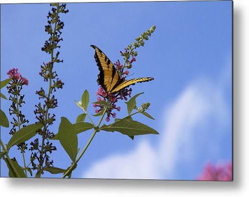 Butterfly Metal Print featuring the photograph Butterfly In The Mist by Trudy Wilkerson