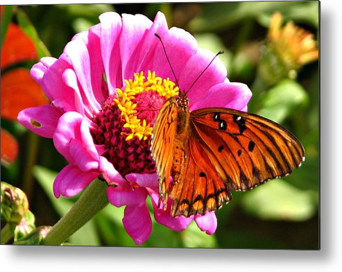 Butterflies Metal Print featuring the photograph Butterfly Treat by David Brown
