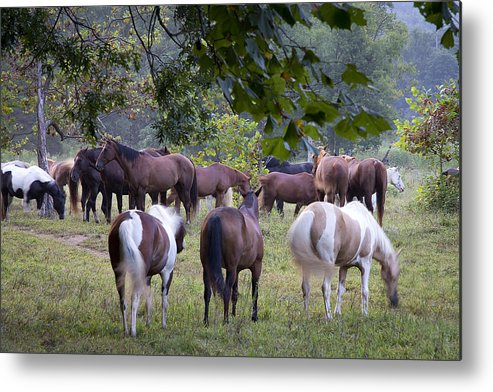 Cades Cove Metal Print featuring the photograph Cades Cove Horses by Mike Aldridge