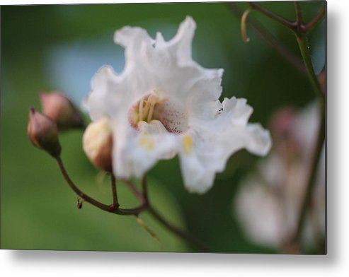 Flower Metal Print featuring the photograph Calm by Amanda St Germain
