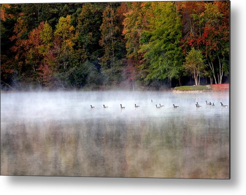 Canada Metal Print featuring the photograph Canada Geese In Georgia... by Tanya Tanski