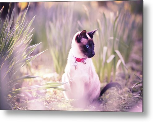 Horizontal Metal Print featuring the photograph Cat Sitting By Daffodils by Sasha Bell