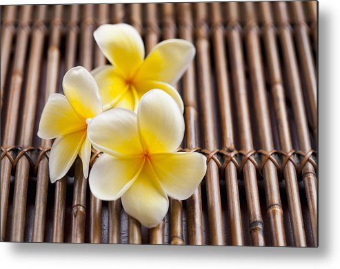 Horizontal Metal Print featuring the photograph Close-up Of Pink Plumeria Flower by Kristin Lee