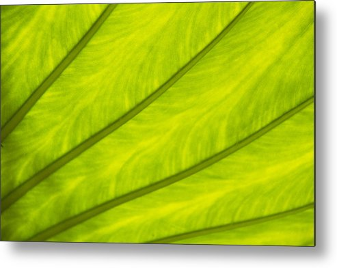 Horizontal Metal Print featuring the photograph Close-up Of Surface Of A Green Leaf by Daisuke Morita