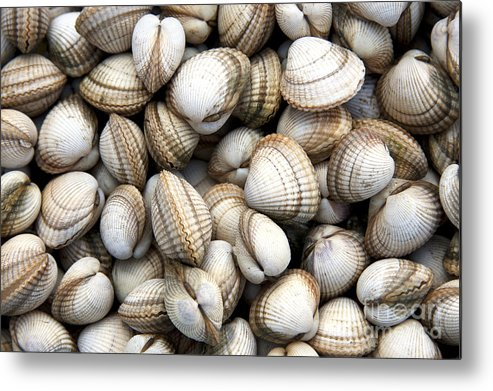 Animals Metal Print featuring the photograph Cockle Shell Background by Jane Rix