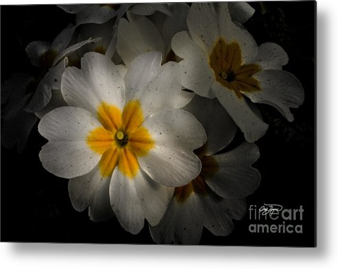 Flower Metal Print featuring the photograph Color Splash - Artist Cris Hayes by Cris Hayes