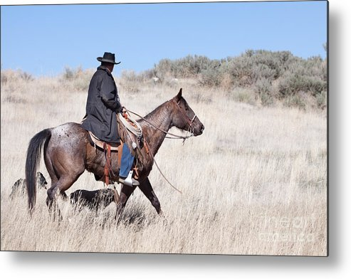 Cowboy Metal Print featuring the photograph Cowboy On Horseback by Cindy Singleton