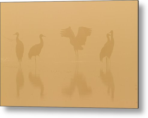 Horizontal Metal Print featuring the photograph Crane In Mist by Zhouyousifang