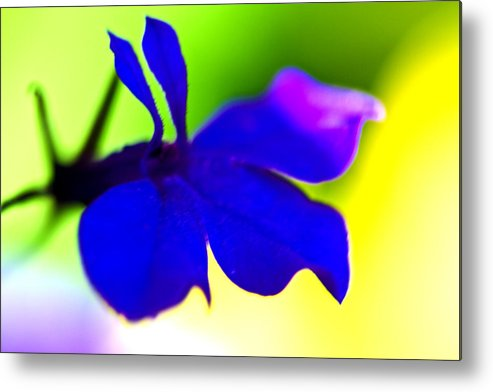 Blue Flower Metal Print featuring the photograph Deeply Blue by Marie Jamieson