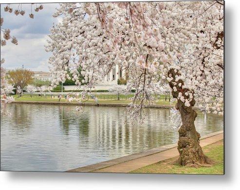 Metro Metal Print featuring the digital art Digital Liquid - Cherry Blossoms Washington Dc 6 by Metro DC Photography