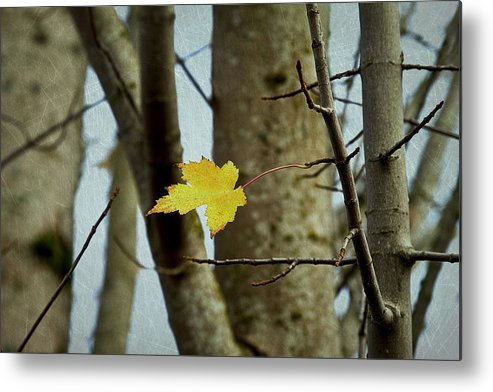 Autumn Metal Print featuring the photograph Don't Let Me Fall by Rebecca Cozart