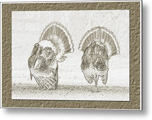 Eastern Wild Turkey Metal Print featuring the photograph Double Trouble by Wild Expressions Photography