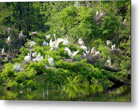Egret Metal Print featuring the photograph Egret Estuary by Suzanne Gaff