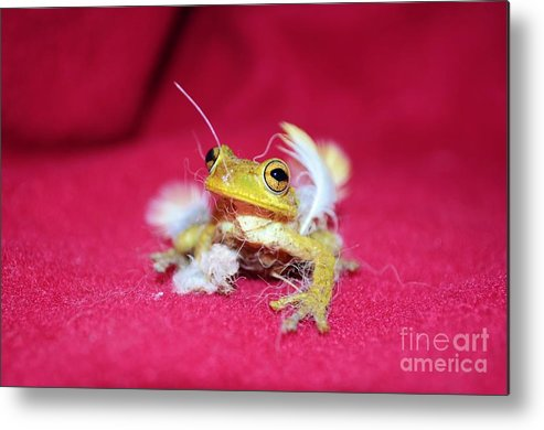 Frog Metal Print featuring the photograph Ever Have One Of Those Days by Lynda Dawson-Youngclaus