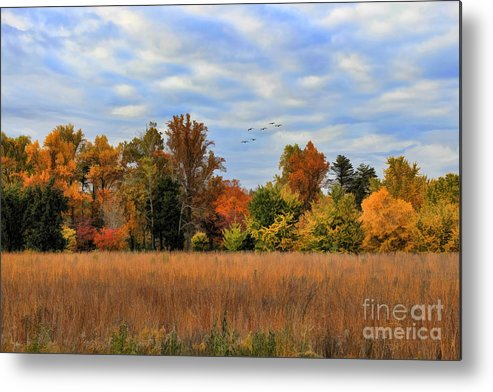 Air Metal Print featuring the photograph Fall by Darren Fisher
