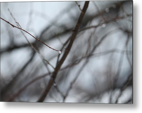 Tree Metal Print featuring the photograph Fall Day by A S