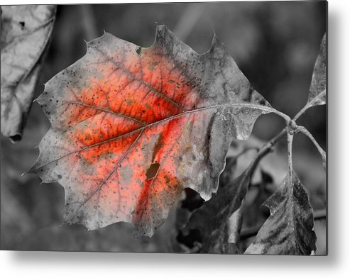 Autumn Metal Print featuring the photograph Fall Leaf by Rick Rauzi
