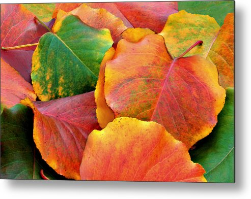 Leaves Metal Print featuring the photograph Fall Leaves by Sheila Kay McIntyre